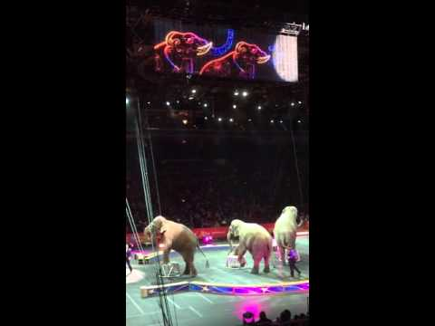Circus 2016 with elephants #2