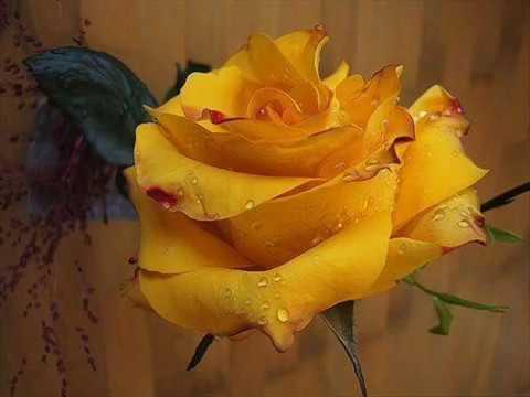 Sarı çiçek sarartıyı dağları ***** ali abbas aslantürk