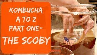 How To Make/Grow Kombucha Scoby At Home Using Store-bought Kombucha