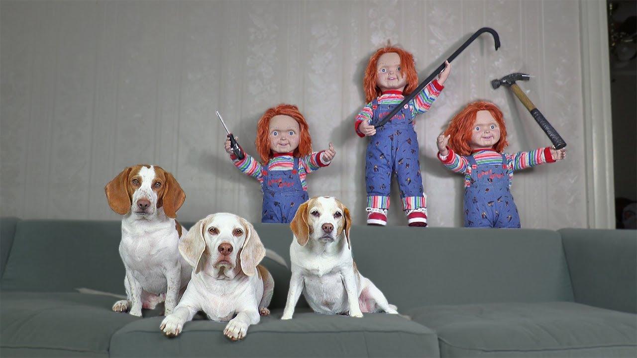 Dogs vs Chucky Invasion Prank: Funny Dogs Maymo, Penny & Potpie Halloween Pranks