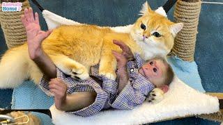 BiBi steals Ody cat's hammock