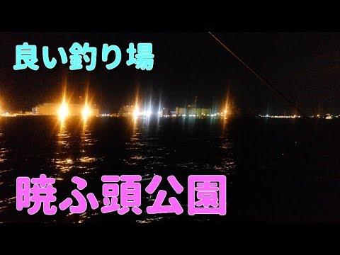 お台場の端っこで電気うき釣り【暁ふ頭公園】