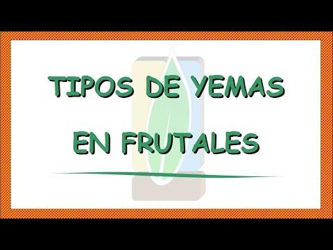 Tipos de yemas en frutales cerezo youtube for Tipos de viveros frutales