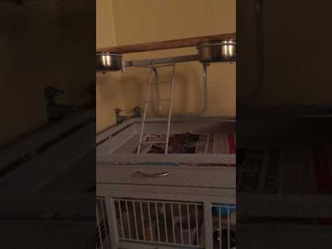 Parrot cage setup
