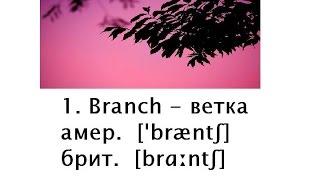 20 СЛОВ Английские слова с транскрипцией и переводом 2