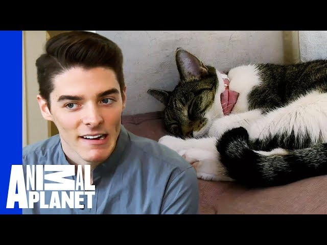 How To Get Over An Extreme Cat Phobia | My Cat From Hell