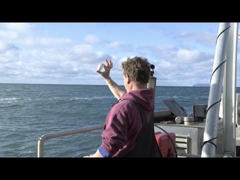 Corporate Zeke vs. The Fightin Kellys | Bering Sea Gold