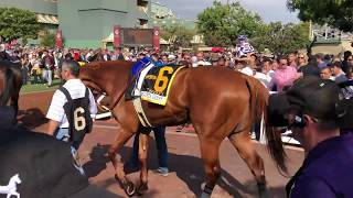 Belmont Stakes 2018, Justify: Mile and a Half?