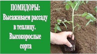 ПОМИДОРЫ: высаживаем рассаду в теплицу. Высокорослые сорта(В этом видео мы покажем, как высаживаем рассаду высокорослых томатов в теплицу.Посадка вытянутой рассады..., 2014-12-22T20:15:56.000Z)