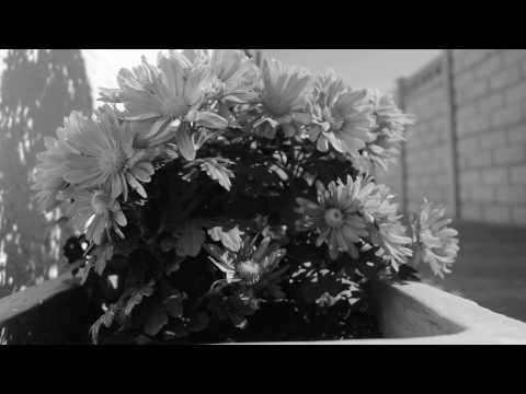 Dark Orchid - Shake The Ground