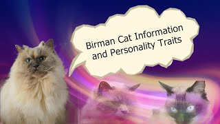 Birman Cat Information and Personality Traits