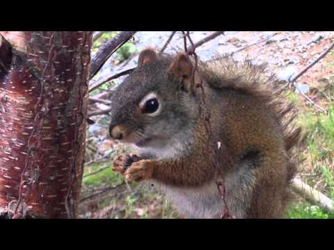 Squirrel could care less how close you get at dinner time
