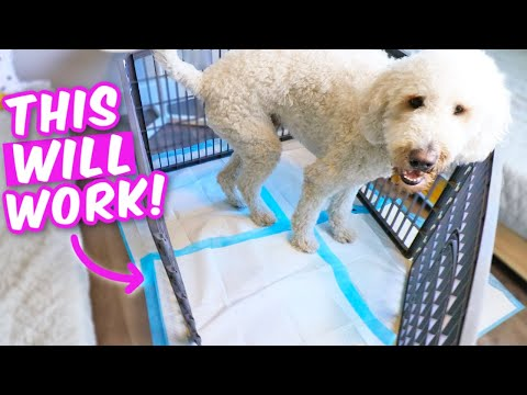 TRUTH ABOUT POTTY PADS 🤯 How To Potty Train Indoors, FAST
