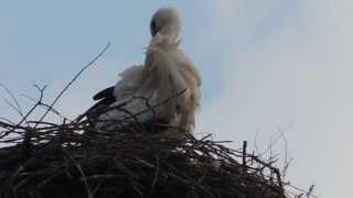 Ich bins wieder - der Storch aus Färdd...