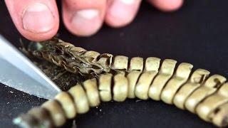 Cutting Open A Rattlesnake Rattle Close Up