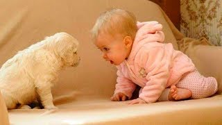 Cutest Dogs in the world | Cute Dogs Videos Compilation 2019 #3