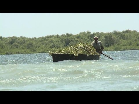 Mangroves: Karachi's natural defence under threat