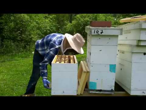 How To Stop Your Hive From Swarming