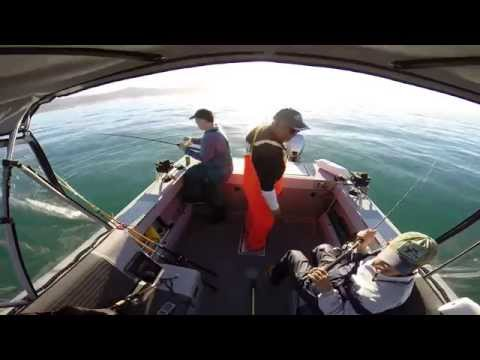 Best Ever Catfish Fishing tip, Hot dog bait rig for Channel Blue Flathead Wels Ginch Cats from YouTube · Duration:  3 minutes 14 seconds
