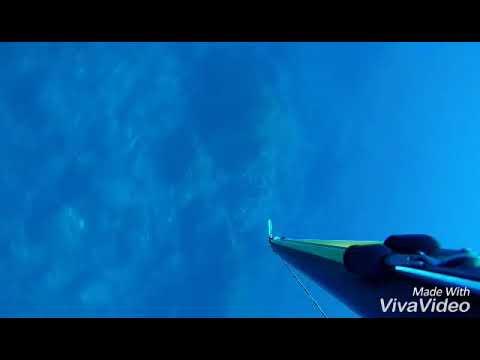 Spearfishing collo Algeria by Hakim El Marinero( Sériole 3,5 kg )
