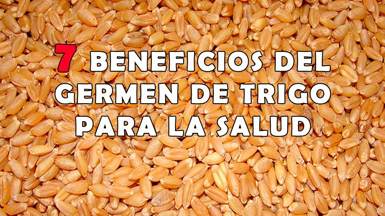 Para que sirve el germen de trigo en la salud