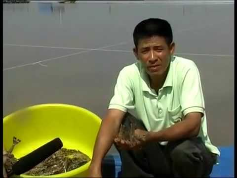 Hygiene and safety of farmed shrimp in Vietnam - in Vietnamese