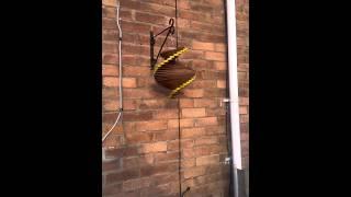 Wind Spiral - Wood Spinner
