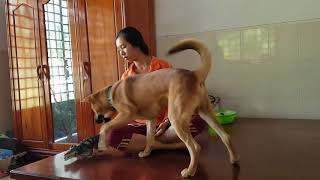 Ultimate Dog Cute Girl Play And Massage A Dog Partner