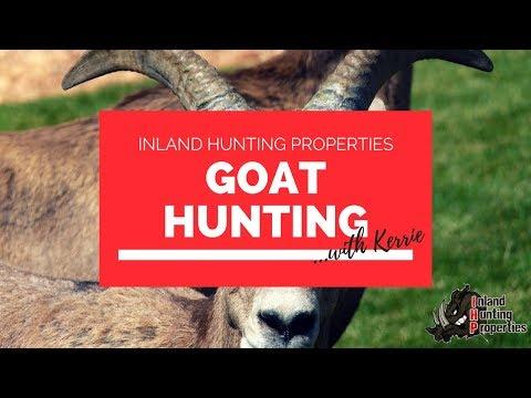 GOAT HUNTING | Inland Hunting Properties Australia