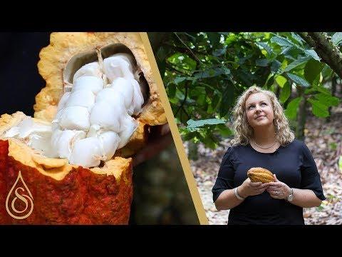 Harvesting Raw Cocoa Beans In Ghana | Kirsten Tibballs