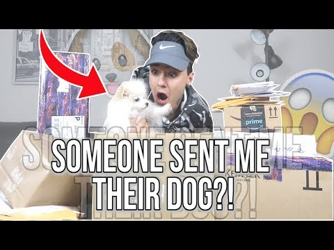 SOMEONE SENT ME A DOG?! OPENING FANMAIL