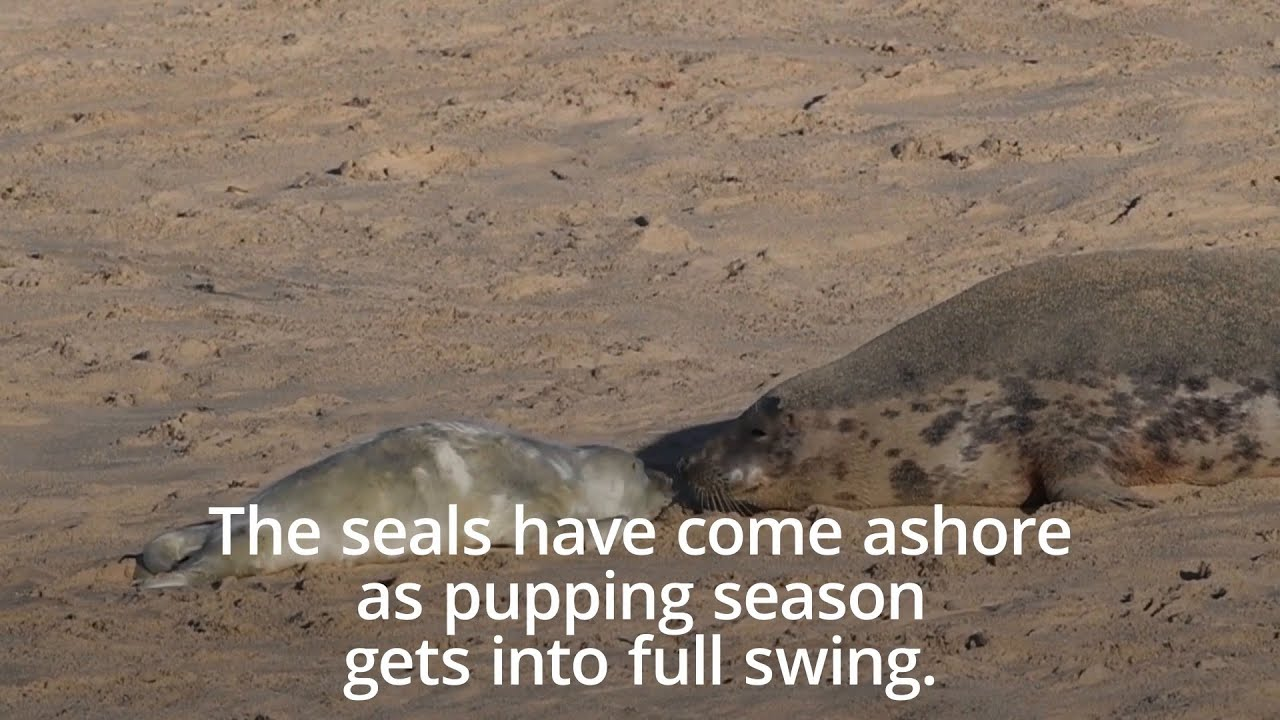 Seals At Horsey A Locals Guide To The Best Views Mill