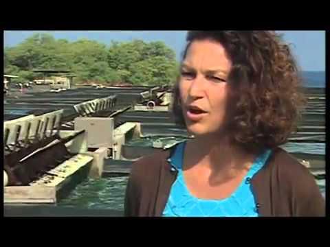 Hawaiian Spirulina Cultivation   Cyanotech's National Media Report   Nutrex Hawaii