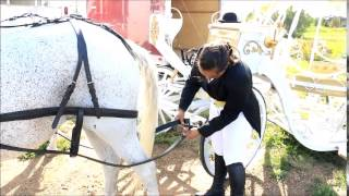Preparing Horses &  Cinderella Carriage for a Wedding Service