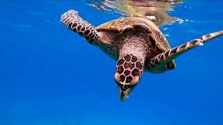 Сейшельские острова Купание с черепахами и морская рыбалка на яхте