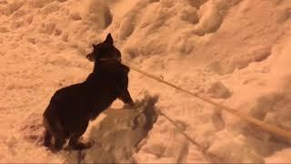 СмолПёсики. Беги на радугу, Малыш! 😢 Смерть собаки. #разделдобрыхдел