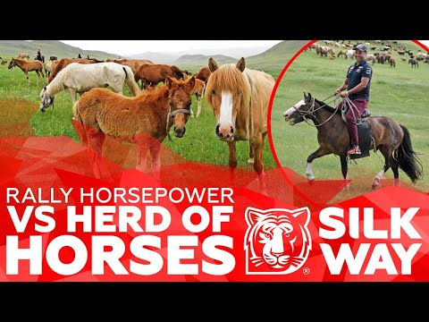 RALLY HORSEPOWER vs HERD OF HORSES. Pilots of SWR 2019 ahead of steeds and camels – EPIC VIDEO