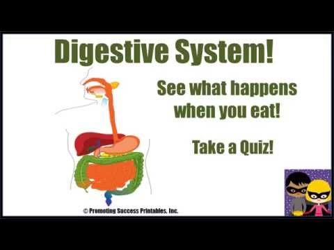 Digestive System Human Body Science Video...
