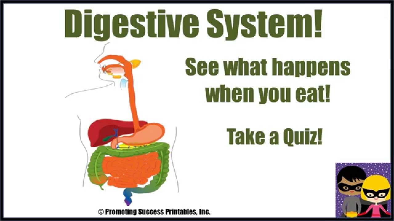Watch on Digestive System Worksheet First Grade