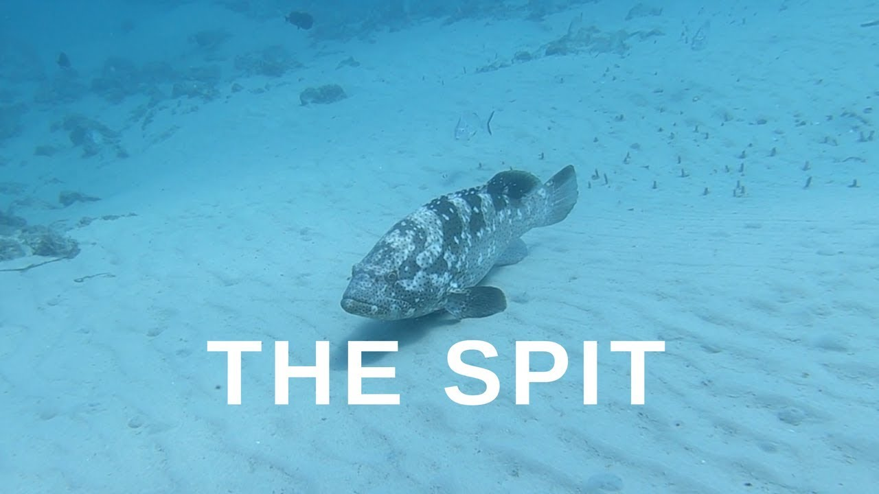 The Spit Gold Coast - Spearfish and Freedive VLOG 2