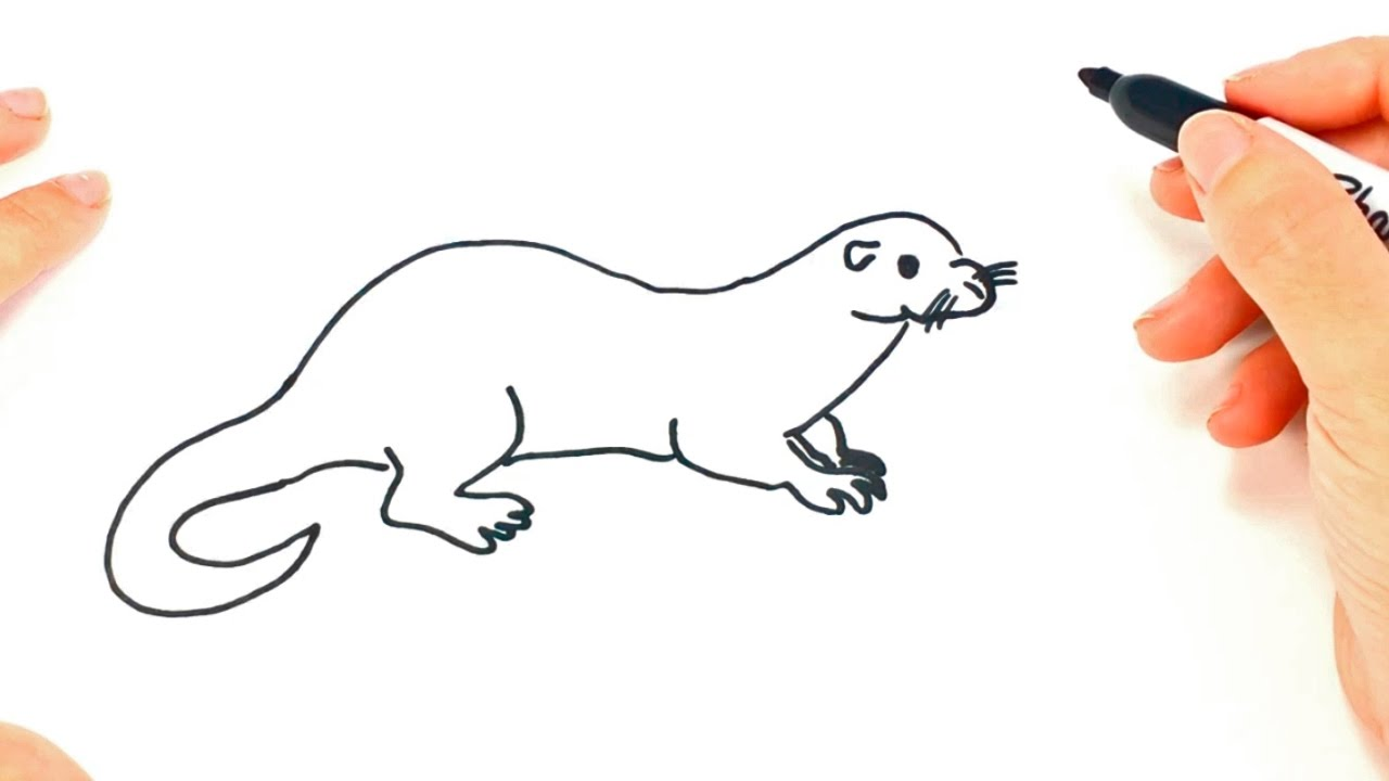 how to draw a otter step by step otter drawing lesson [ 1280 x 720 Pixel ]