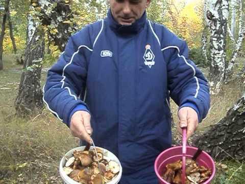 Репортаж с Кумысной поляны
