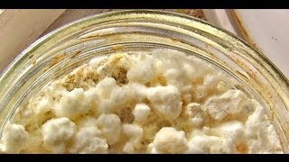 how to make a mycelium как сделать мицелий вешенки