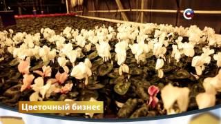 Цветочный бизнес | Бизнес | Телеканал 'Страна'