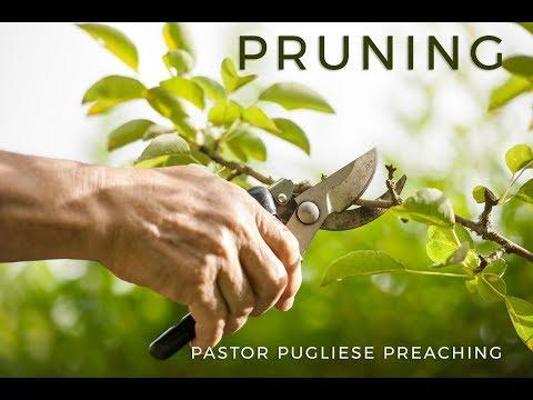 Pruning 09272017 El Paso Christian Church Live Stream