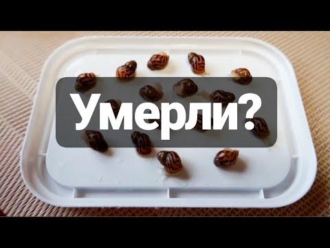 ЧП У УЛИТЯТ