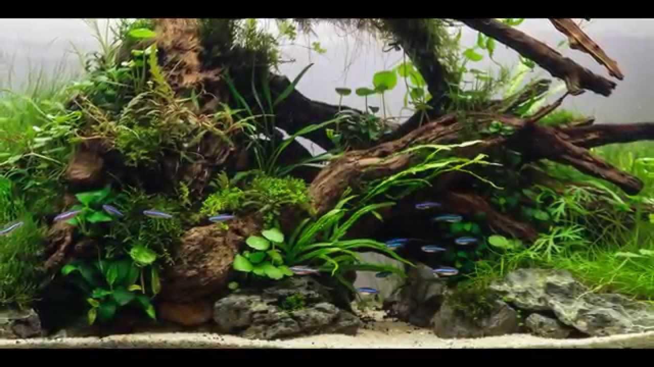 idee pour aquarium plante, beautifull aquascaping - YouTube