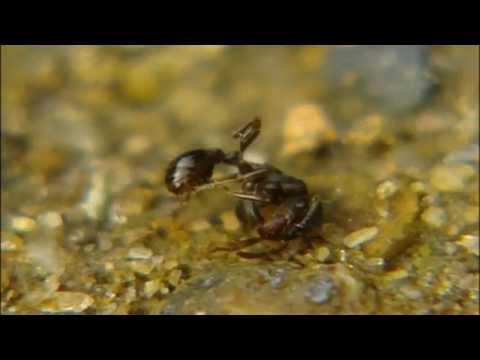 자연의 세계 - 개미의 적들