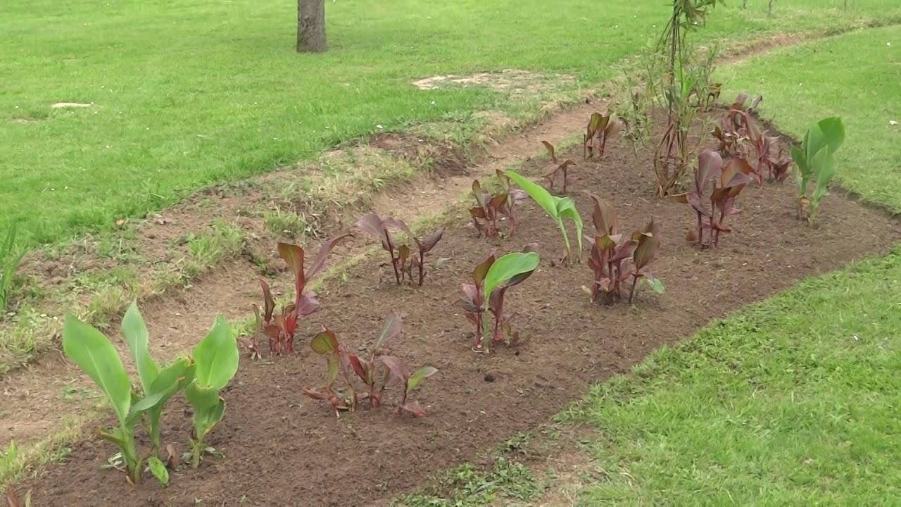 Seconde Plate-Bande créé .... On aime s\'occuper de notre jardin ...