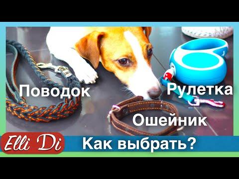 Рулетка, ошейник, поводок для собак | Покупки из зоомагазина | Elli Di Собаки